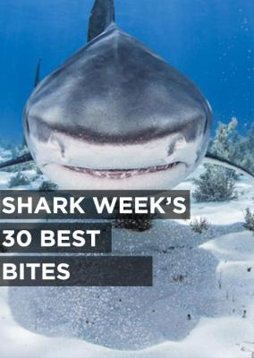 Shark Week's 30 Best Bites